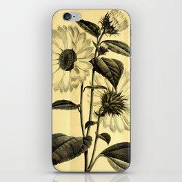 Sunflower Helianthus multiflorus 1891 iPhone Skin