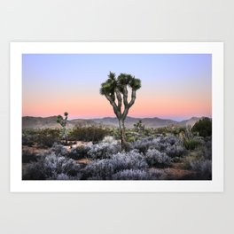 Joshua Tree Sunset. Joshua tree. Pink. Tree. Desert. Mojave. California. Art Print