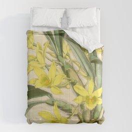 Dendrobium senile Comforters