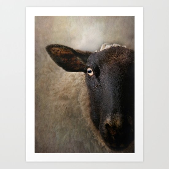 In a sheep's eye Art Print