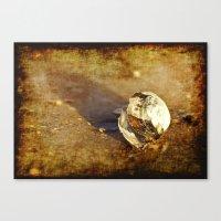 seashell Canvas Prints featuring Seashell by Svetlana Sewell