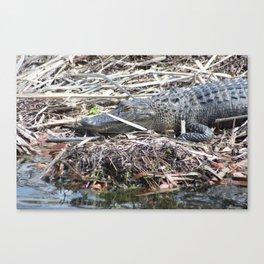 Gator close-up Canvas Print