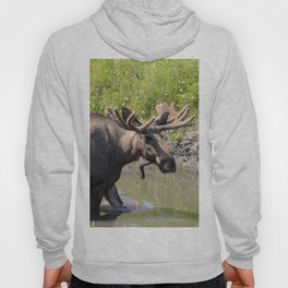 Moose standing in the water Hoody
