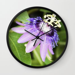 Purple Haze Perfume Passion Flower From Closed to Open Wall Clock