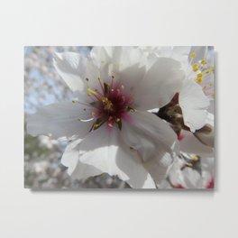 Almond Blossom Series 6 Metal Print