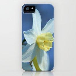 Daffodil in Spring iPhone Case