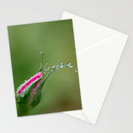 The Bloom Stationery Cards