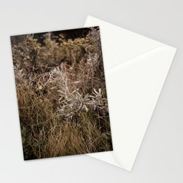 Fall Textures 2  Stationery Cards