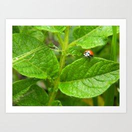 Lady Bug Art Print