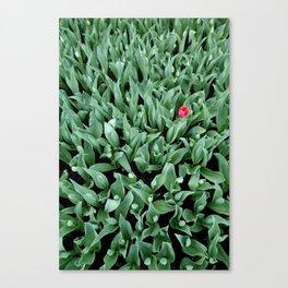 #tulip Canvas Print