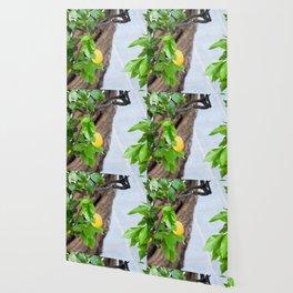 Italian Lemon Tree Wallpaper