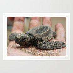 baby olive ridley sea turtle Art Print