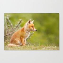 The Cute Fox Kit (Red Fox Cub) Canvas Print