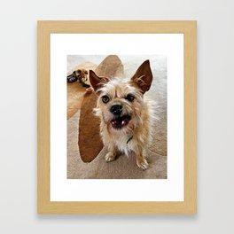 Grumpy Dog Framed Art Print