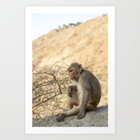 Monkey Portrait, Sun Temple, Jaipur India Art Print