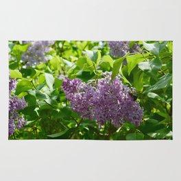 Lilacs in Bloom Rug