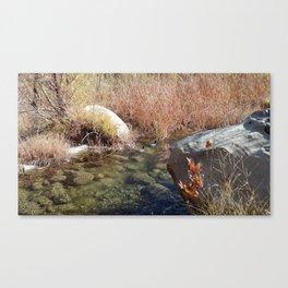 Ducks in December Canvas Print