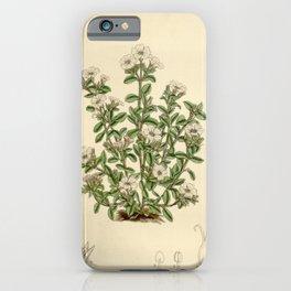 Flower 6699 gypsophila cerastioides iPhone Case