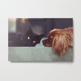 CAT - DOG - LYING - DOWN - ANIMALS - FRIENDS - PHOTOGRAPHY Metal Print