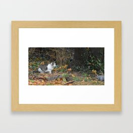 The Cat and the Squirrel Framed Art Print
