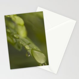Morning Raindrops Stationery Cards