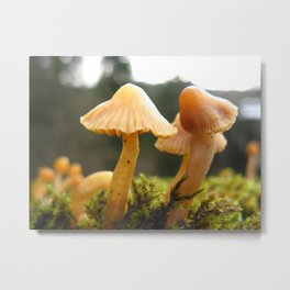 Wild Mushrooms Metal Print