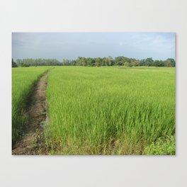 Natural vegetation rice Canvas Print
