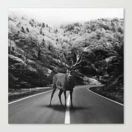 Deer Walker Road Canvas Print