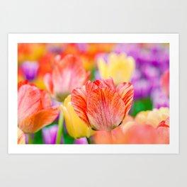 Magic of spring Art Print