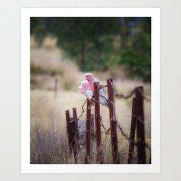 Australian Pink Galahs, Gunnedah, NSW, Australia Art Print