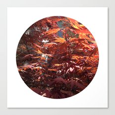 Planetary Bodies - Japanese Maple Canvas Print