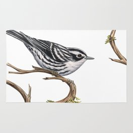 Black-and-White Warbler (Mniotilta varia) Rug
