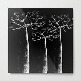 3 white baobab Metal Print