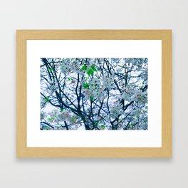 Cherry Blossom (Blue) Framed Art Print