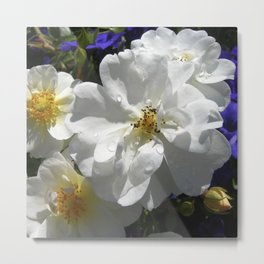 white garden rose XII Metal Print