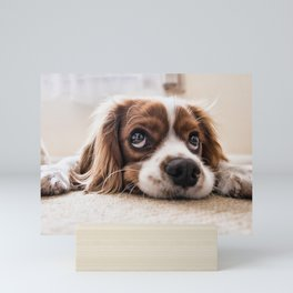 Dog Sad Waiting Mini Art Print