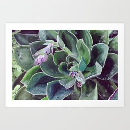 Succulent Flower Painting Art Print