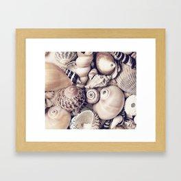 Vintage  Sea Shell Collection Coastal Style Framed Art Print