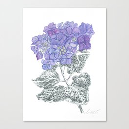 Hydrangea 01 Botanical Flower * Lavender Blue Hydrangea Canvas Print