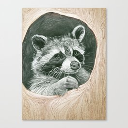 Raccoon In A Hollow Tree Canvas Print