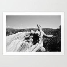 Colorado Tree Art Print