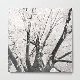 Autumn Tree (Black and White) Metal Print