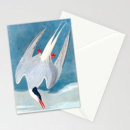 Arctic Tern Bird Stationery Cards
