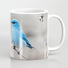 Mountain Bluebird on the Tansy Coffee Mug