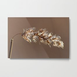 Phragmites Australis - Common Reed Metal Print