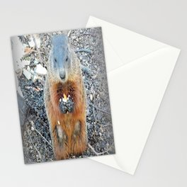 Ground Hog Stationery Cards