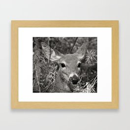 Hello Deer Framed Art Print