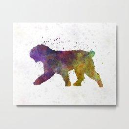 Spanish Water Dog in watercolor Metal Print