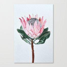 King Protea Canvas Print