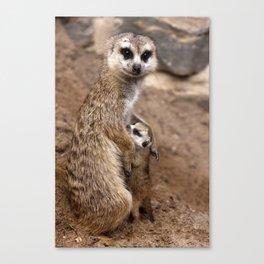 Meerkats   Erdmännchen Canvas Print
